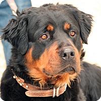 Adopt A Pet :: Hans - Palmdale, CA