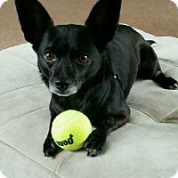 Adopt A Pet :: Rickie - New Windsor, NY