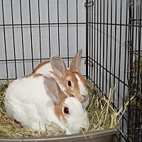 Dutch for adoption in Erie, Pennsylvania - Noel