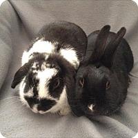 Adopt A Pet :: Mimi - Paramount, CA