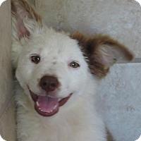 Adopt A Pet :: Angel - Burbank, OH