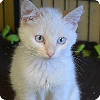 Adopt A Pet :: Sasha - Winchester, KY