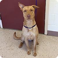 Shepherd (Unknown Type) Mix Dog for adoption in McDonough, Georgia - Tipsy