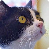 Adopt A Pet :: Nelly - Sierra Vista, AZ