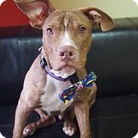 Adopt A Pet :: Brian - Philadelphia, PA