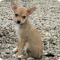 Adopt A Pet :: BUNNY~3.6 LBS - Waterbury, CT
