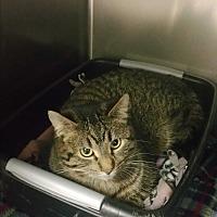 Adopt A Pet :: Gabbie - Chippewa Falls, WI