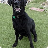 Adopt A Pet :: Sequoia - Buckeystown, MD