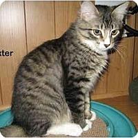 Adopt A Pet :: Baxter - Portland, OR