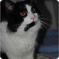 Adopt A Pet :: Kincaid - Marietta, GA