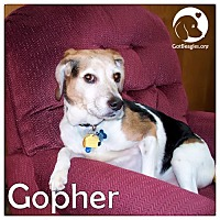 Adopt A Pet :: Gopher - Novi, MI
