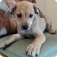 Adopt A Pet :: Hank - Burbank, CA