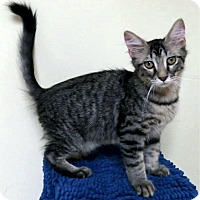 Adopt A Pet :: Kirk - Edmond, OK