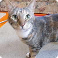 Adopt A Pet :: Savanna - Witter, AR