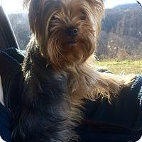 Adopt A Pet :: Andrew - Hazard, KY