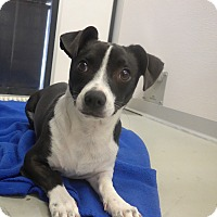 Adopt A Pet :: Lightning - Manning, SC