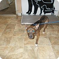 Adopt A Pet :: Yahtzee - Lewisburg, TN