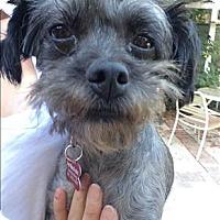 Adopt A Pet :: Brenda - Encino, CA