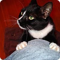 Adopt A Pet :: Dory - Somerville, MA