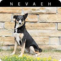 Adopt A Pet :: NEVAEH - Toronto, ON
