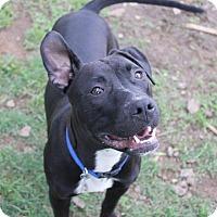 Adopt A Pet :: Jack - Burlington, NC