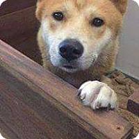 Adopt A Pet :: Rhett - Denver, CO