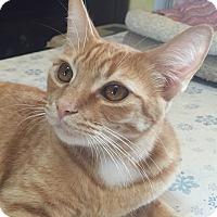 Adopt A Pet :: Marigold - Encinitas, CA