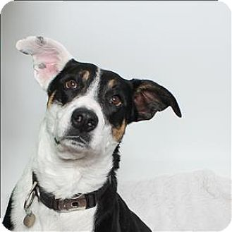 Border Collie Mix Dog for adoption in San Luis Obispo, California - Ollie