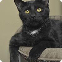 Adopt A Pet :: Roo - Germantown, TN