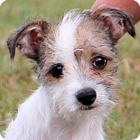 Adopt A Pet :: Howie~adopted! - Glastonbury, CT