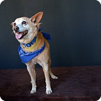 Adopt A Pet :: Eardley - Van Nuys, CA