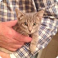 Adopt A Pet :: Lucie - Fowlerville, MI