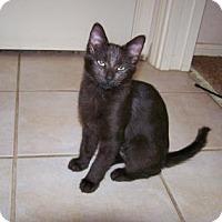 Adopt A Pet :: Fantasia - Bulverde, TX