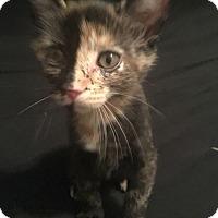 Adopt A Pet :: Rocky Road - Bonner Springs, KS