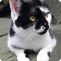 Adopt A Pet :: Holly - Hawk Point, MO