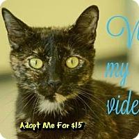 Adopt A Pet :: Paris - Sarasota, FL