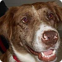 Adopt A Pet :: Delilah - Lockhart, TX