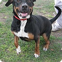 Adopt A Pet :: Chopper - Orange Park, FL
