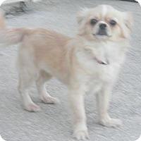 Adopt A Pet :: Samantha - Orange Park, FL