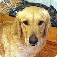 Adopt A Pet :: Bandit - Cheshire, CT