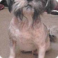 Adopt A Pet :: GiGi - Lakeland, FL