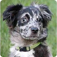 Adopt A Pet :: Cassidy - Mocksville, NC