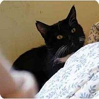Adopt A Pet :: Bingo (FIV+) - Wakinsville, GA