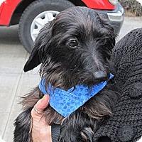 Adopt A Pet :: ARNOLD - Portland, OR