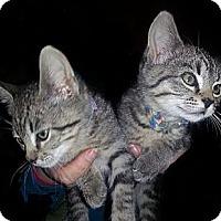 Adopt A Pet :: Natalie - Norfolk, NE