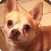 Adopt A Pet :: Turbo - Edmond, OK