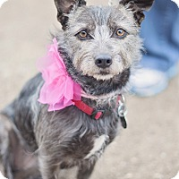 Adopt A Pet :: Gracie - Adoption Pending - Kingwood, TX