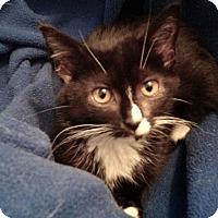 Adopt A Pet :: Thelma - Colmar, PA