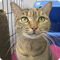Adopt A Pet :: Sophie - Oxford, NY