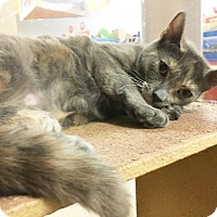 Adopt A Pet :: Pearl - Arlington/Ft Worth, TX